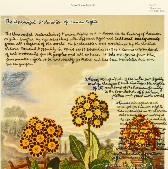 The Universal Declaration of Human Rights handwritten on an illustration of orange flowers