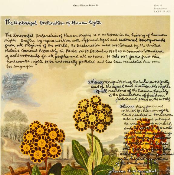 The Universal Declaration of Human Rights handwritten on an illustration of orange flowers